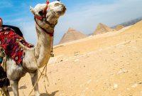 12 Kegiatan Wajib Dilakukan Saat di Mesir